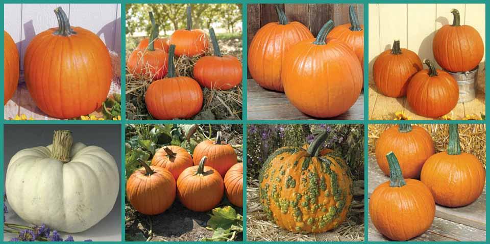 pumpkinTypes